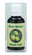 Black Walnut (30 ml)